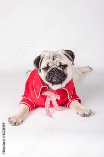 Elegant dog dress