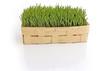 Korb mit Weizengras