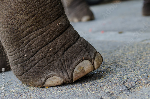 Foot of elephant.