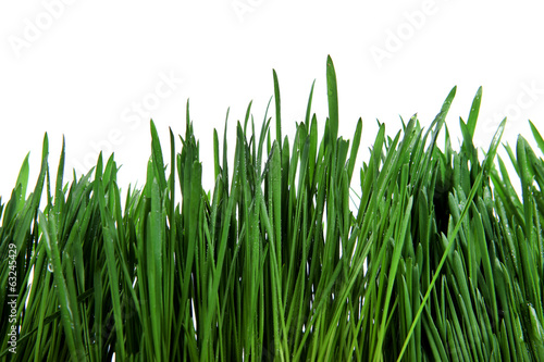 Fresh Grass Isolated