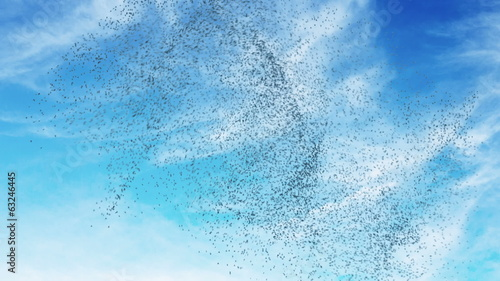 Flock of birds swarming against a blue sky.