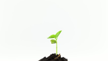 Grows Sprouting Out Of Ground, plant timelapse Growing