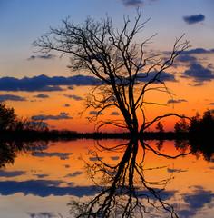 leafless tree on sunset background