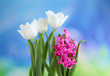 Beautiful tulips and hyacinth flower on bright background