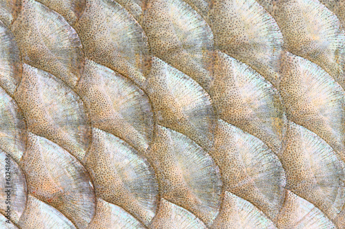 Natural background from fish scales (The Common Bream).