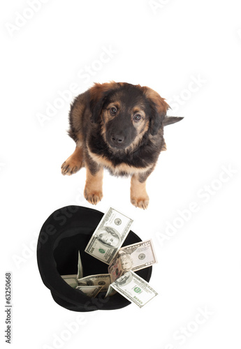 dog and money on a white background isolated