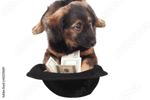 cute puppy and hat with dollars