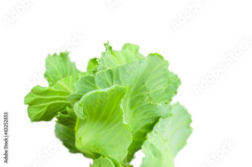 Close up detailed image of cabbage sprouts