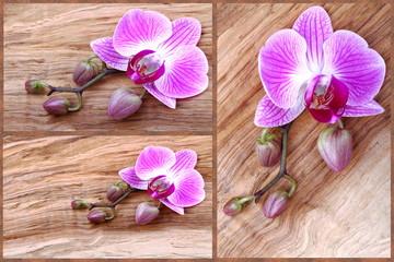 Composizione di orchidee con boccioli