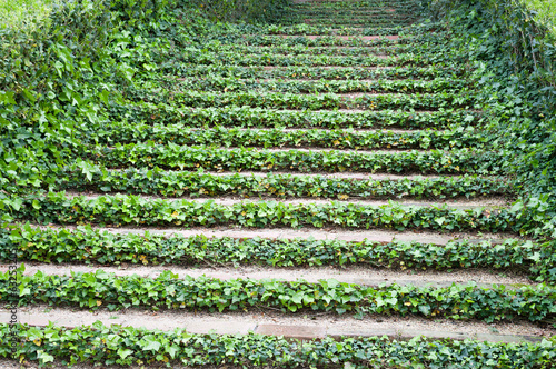 Stairs with ivy