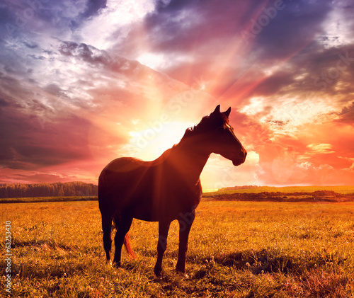 landscape with horse in sunrise
