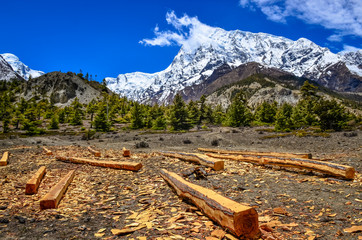 Wood timber in Himalayas mountains landscape