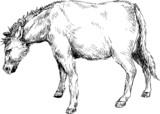 hand ddrawn horse - 63254471