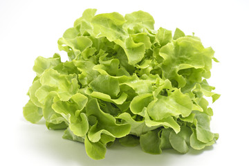 Green oak leaf lettuce isolated on white