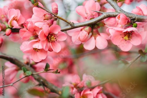 Foto op Canvas Bloemenwinkel Spring Blossoms