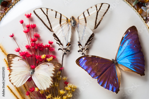butterfly composition
