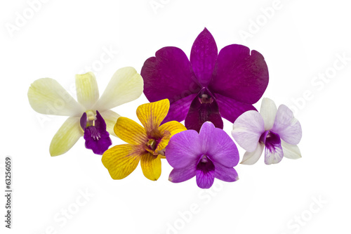 Orchid flower isolated on white