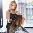 Beaty, hairstyle. Hairdresser salon
