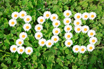2015 with daisies on shamrocks