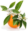 canvas print picture - Orange with flowers