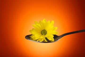 Beautiful flower in silver spoon on orange background