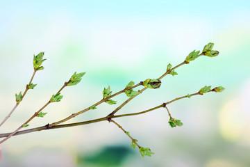 Leaf bud on bright background