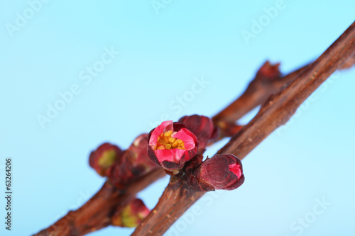 Leaf bud on bright background