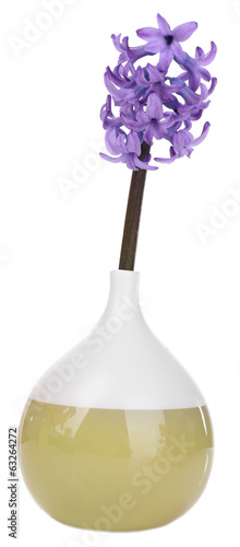Beautiful hyacinths in vase isolated on white