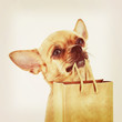 Red chihuahua dog with recycle paper bag.