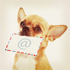 Red chihuahua dog with post envelope and icon e-male.