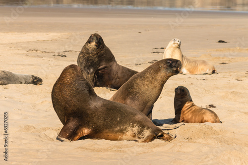 colony of sea lions basking