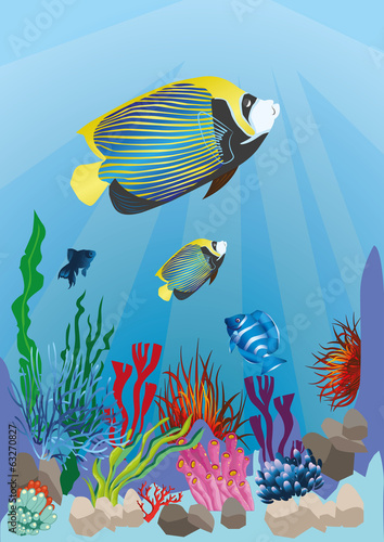 marine life with colorful fish