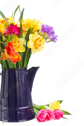 freesia and daffodil flowers in blue pot close up