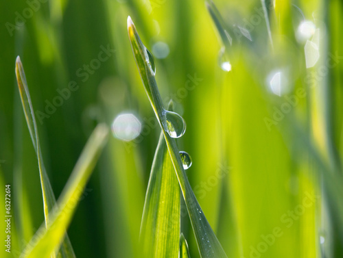 dewdrops on the green grass in sunlight