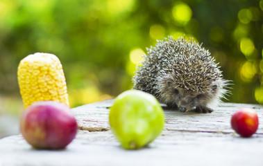 Hedgehog among fruits