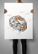 man showing poster of hand drawn brain as medical concept