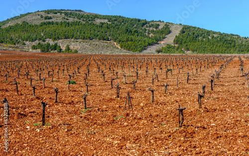 Vineyard in The Alpularras, Andalusia, Spain