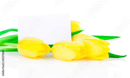 yellow tulips and blank for text, on a white background