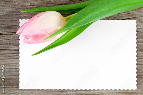 pink tulip and blank card on wooden background