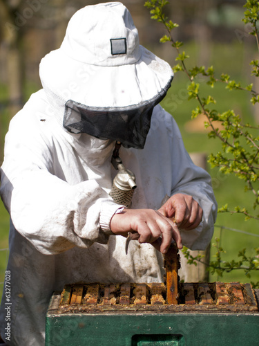 Portrait of a beekeeper with smoker gathering honey at an apiary
