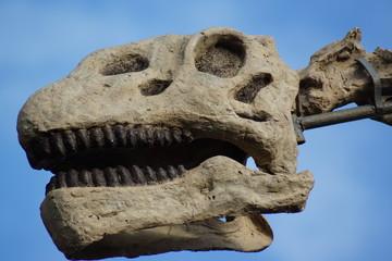 Brachiosaurus - Brachiosaurus altithorax
