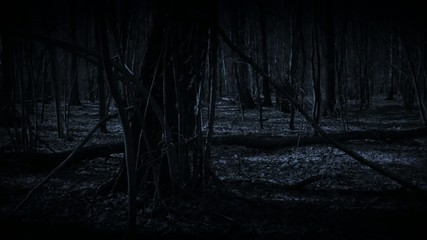 Lost in dark forest.