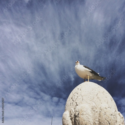 seagul on rock against blue sky