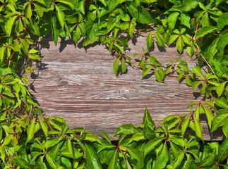 Holzoberfläche von Blättern umrankt