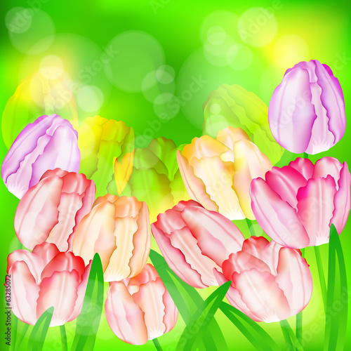 Holiday background, tulip flowers on green, vector