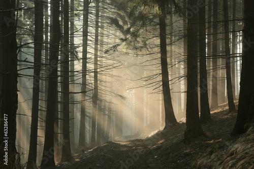 fototapeta na ścianę Szlak w górach w mglisty poranek wczesną wiosną