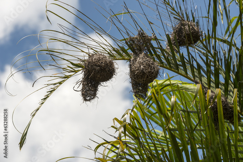 african weaver bird nest