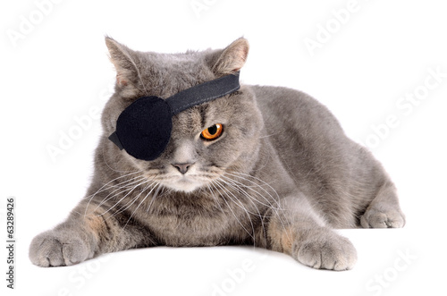 One-eyed cat