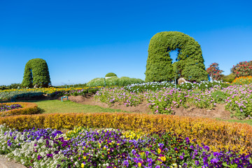European-style garden  Doi inthanon national park, Thailand