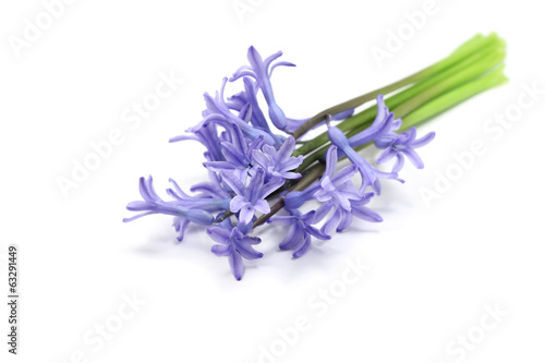 Bouquet of purple hyacinth on white background